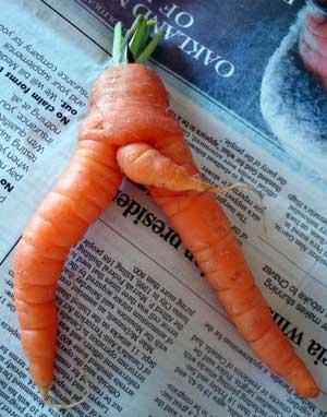 carrotdm7.jpg