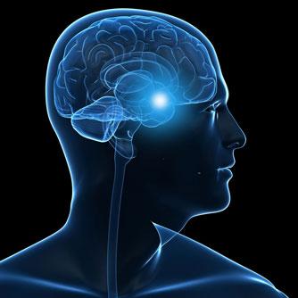 hormones and the brain